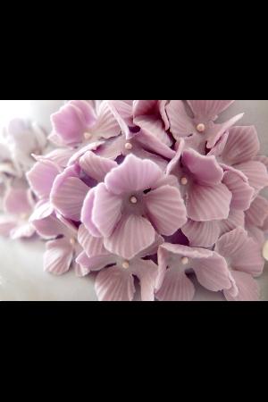 Hortensien aus Zucker